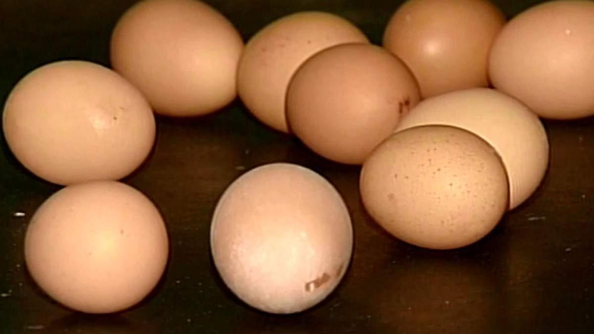 Израиль закрыл границы для украинских яиц
