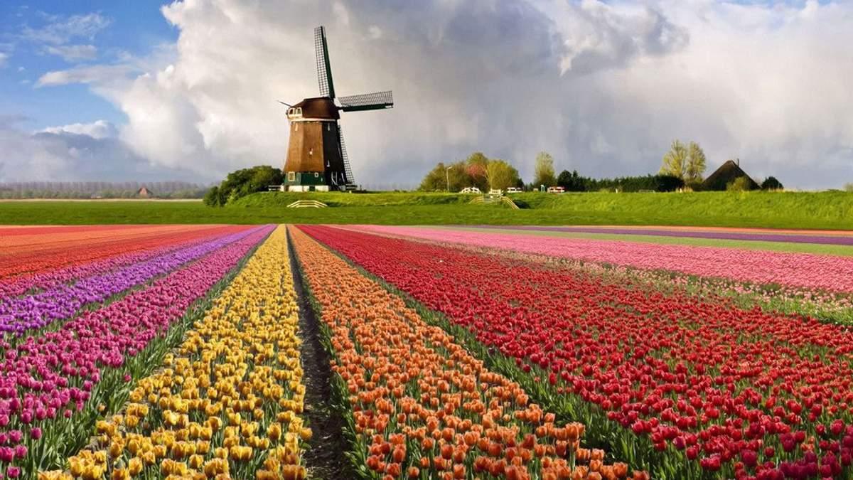Українець у Нідерландах розвиває стартап для фермерів