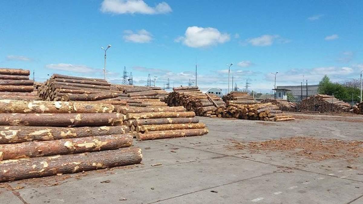 СБУ заблокировала масштабный экспорт древесины в Азию