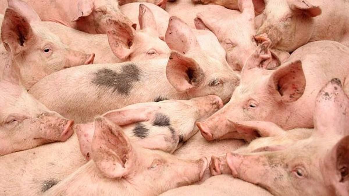 Молдова запретила импортировать свинину из Украины