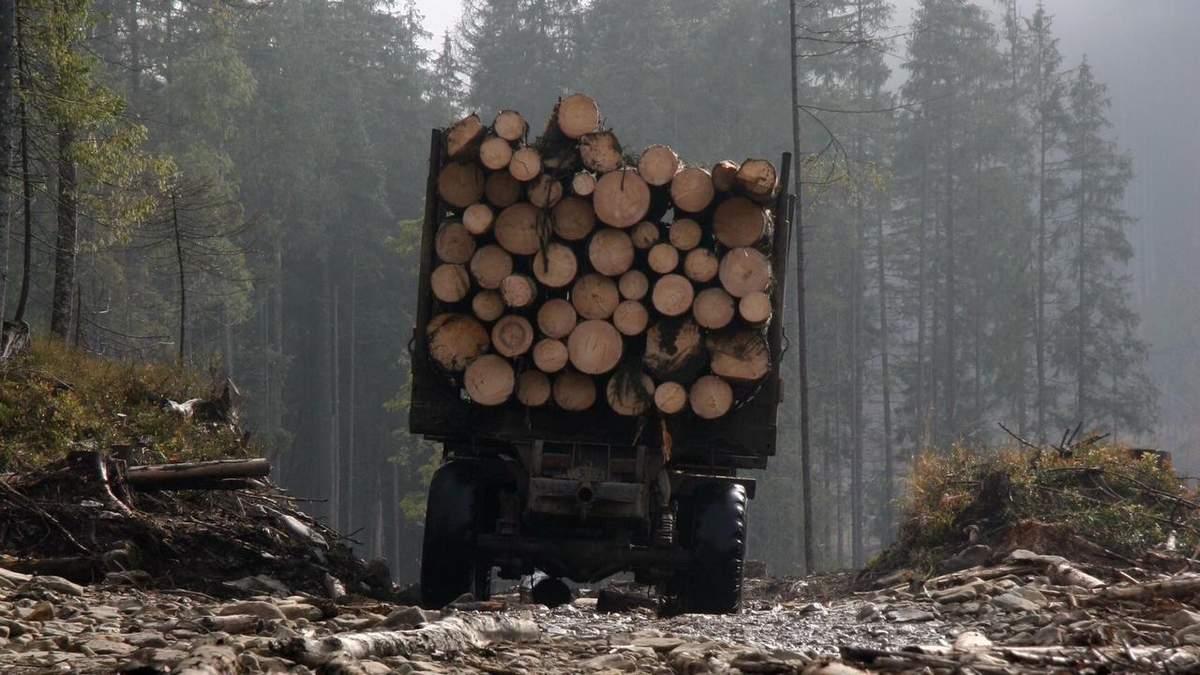 Экспорт леса-кругляка