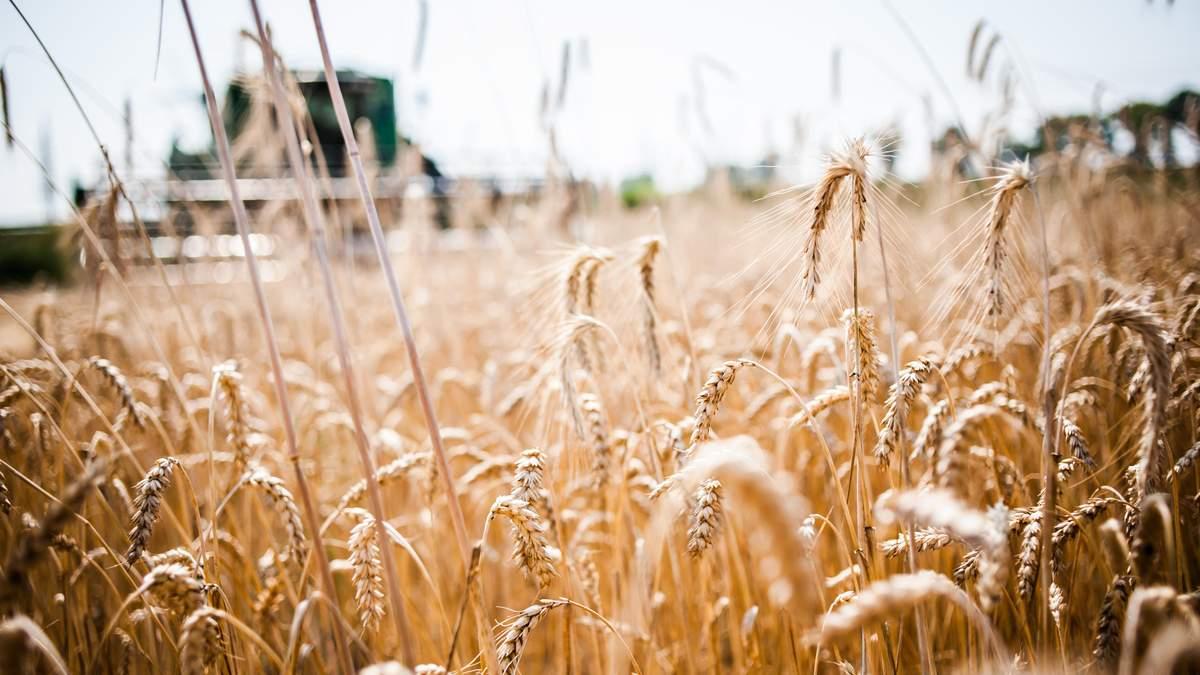 Больше всего зерна продали в Египет