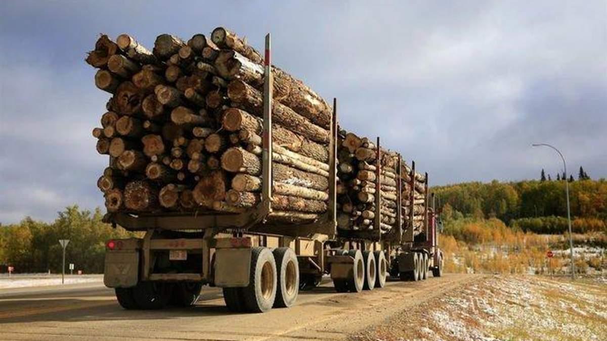 Есть огромная темная сторона украинского экспорта леса в Европу, – эксперт