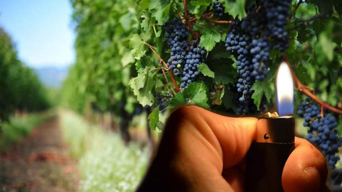 Нещасливий виноград Лакарена або Як Порошенко і Гройсман місцевих бандитів злякались - 31 августа 2018 - Телеканал новостей 24
