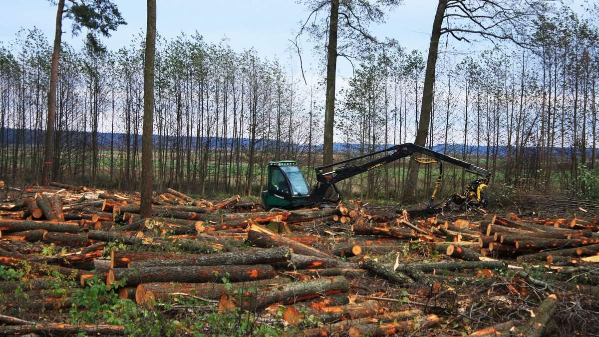 На Львовщине украинскую древесину контрабандой вывозят в Европу