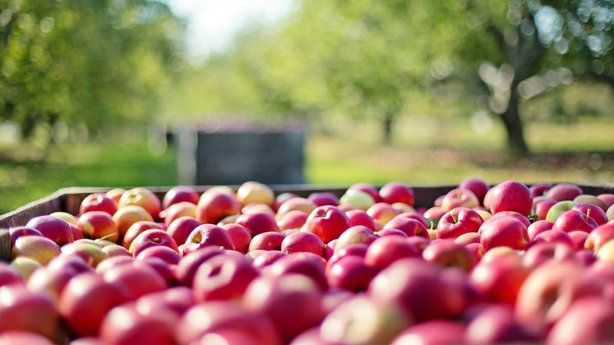 Україна буде постачати великі обсяги фруктів до ОАЕ