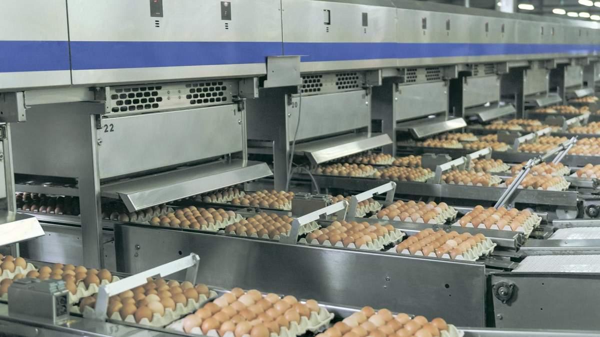 """Авангард"" за полгода существенно увеличил производство и экспорт украинских яиц"