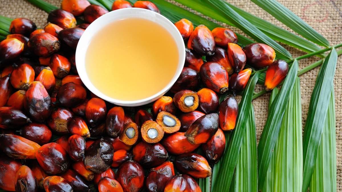 Плоды пальмового масла
