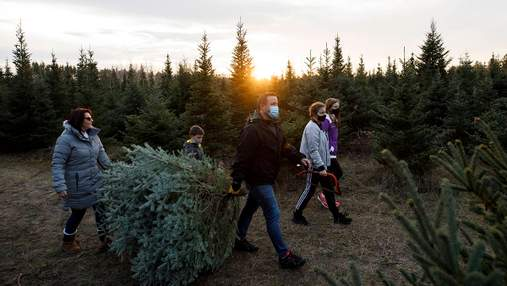 Покупают больше украшений и не торгуются: как начался сезон продажи елок в США