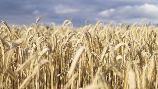 Як експорт зерна вплине на курс гривні, – прогноз експерта